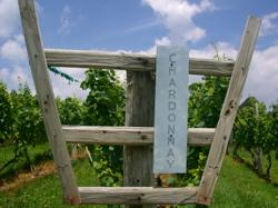 Linden's Hardscrabble Vineyard Chardonnay