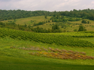 Overlooking Linden Vineyards
